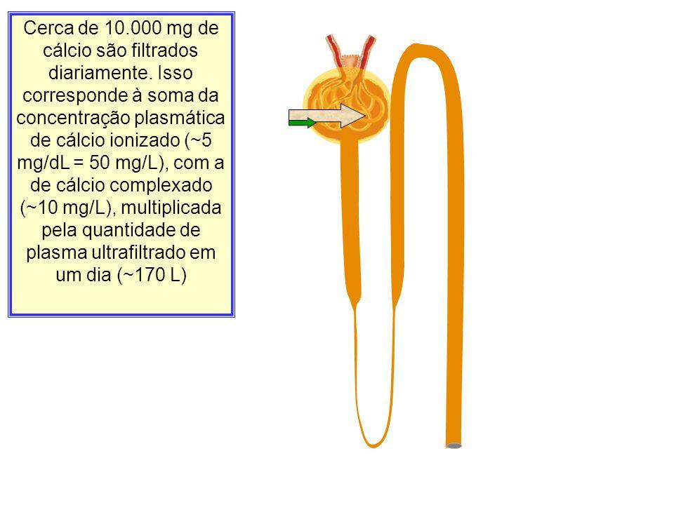 Cerca de 10.000 mg de cálcio são filtrados diariamente. Isso corresponde à soma da concentração plasmática de cálcio ionizado (~5 mg/dL = 50 mg/L), co