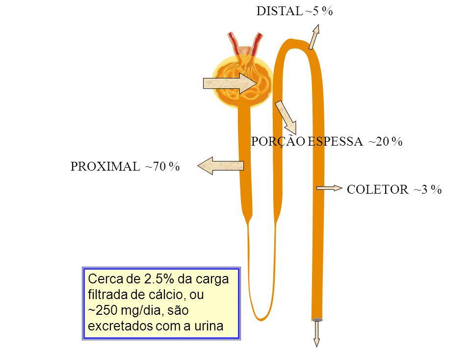 Cerca de 2.5% da carga filtrada de cálcio, ou ~250 mg/dia, são excretados com a urina PROXIMAL ~70 % PORÇÃO ESPESSA ~20 % DISTAL ~5 % COLETOR ~3 %