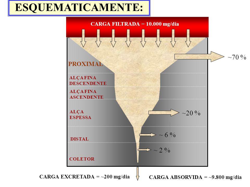 DISTAL ALÇA FINA DESCENDENTE ALÇA ESPESSA COLETOR ALÇA FINA ASCENDENTE PROXIMAL CARGA FILTRADA = 10.000 mg/dia CARGA EXCRETADA = ~200 mg/dia ~70 % ~20