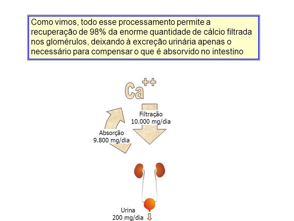 Filtração 10.000 mg/dia Urina 200 mg/dia Absorção 9.800 mg/dia Como vimos, todo esse processamento permite a recuperação de 98% da enorme quantidade d