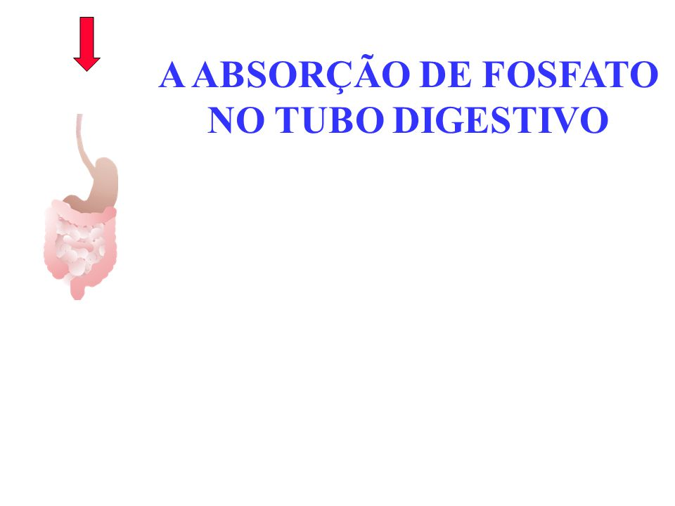 A ABSORÇÃO DE FOSFATO NO TUBO DIGESTIVO