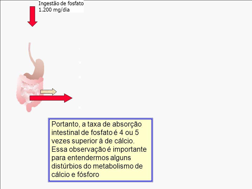 Reabsorção 500 mg/dia Filtração 10.000 mg/dia Urina 200 mg/dia 1,25 (OH) 2 Vit D Incorporação 500 mg/dia Absorção 9.800 mg/dia Ingestão de fosfato 1.2