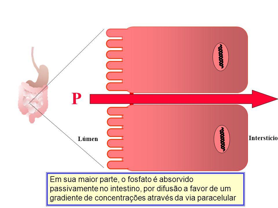 Em sua maior parte, o fosfato é absorvido passivamente no intestino, por difusão a favor de um gradiente de concentrações através da via paracelular C
