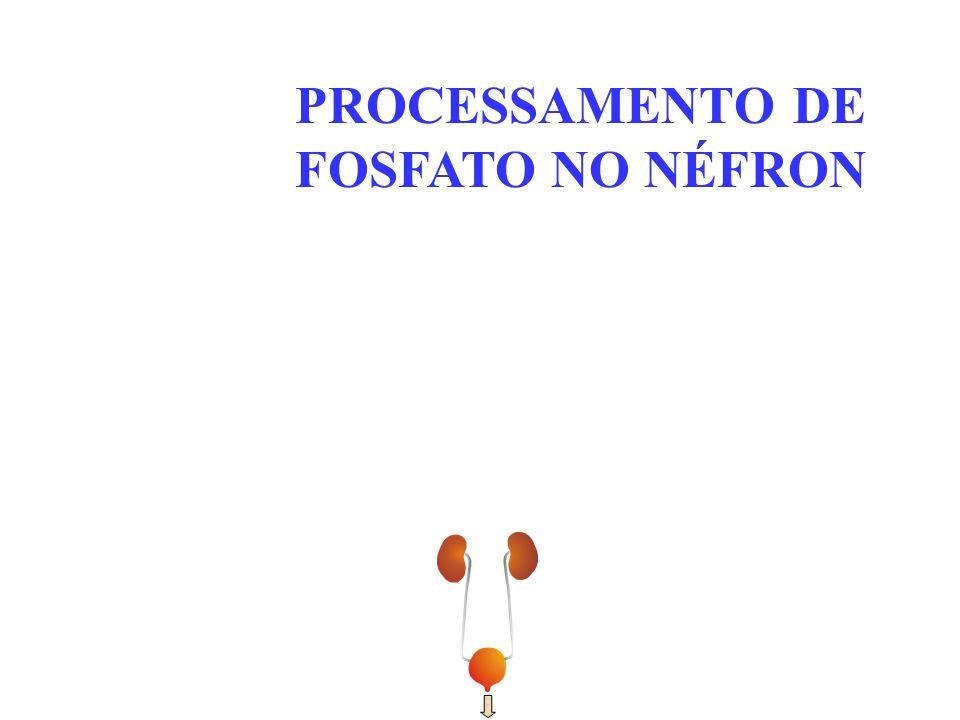 PROCESSAMENTO DE FOSFATO NO NÉFRON