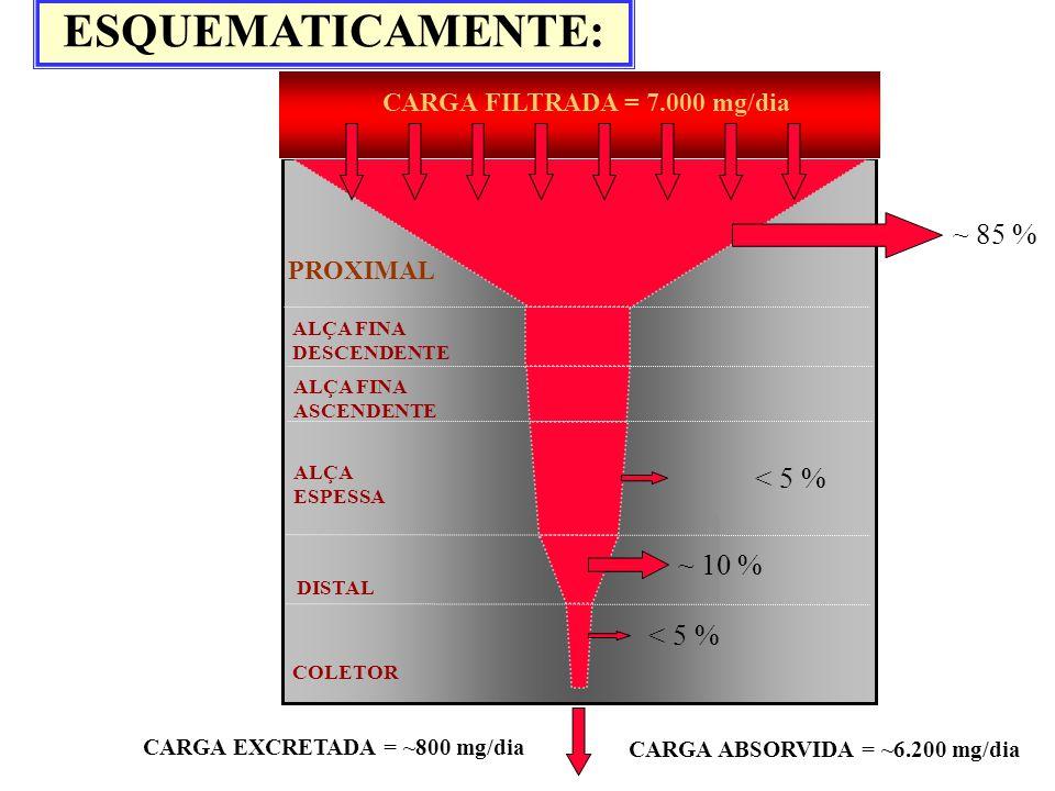 DISTAL ALÇA FINA DESCENDENTE ALÇA ESPESSA COLETOR ALÇA FINA ASCENDENTE PROXIMAL CARGA FILTRADA = 7.000 mg/dia CARGA EXCRETADA = ~800 mg/dia ~ 85 % < 5
