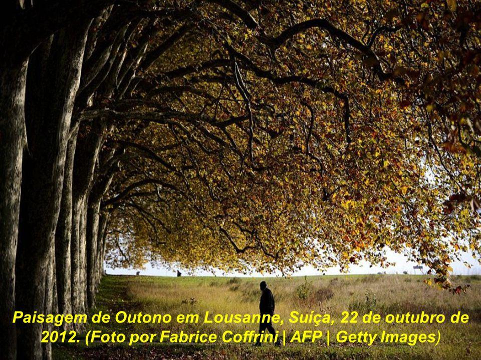 Florestas na Carolina do Norte, EUA, 20 de outubro de 2012. (Foto por Francis Trudeau )