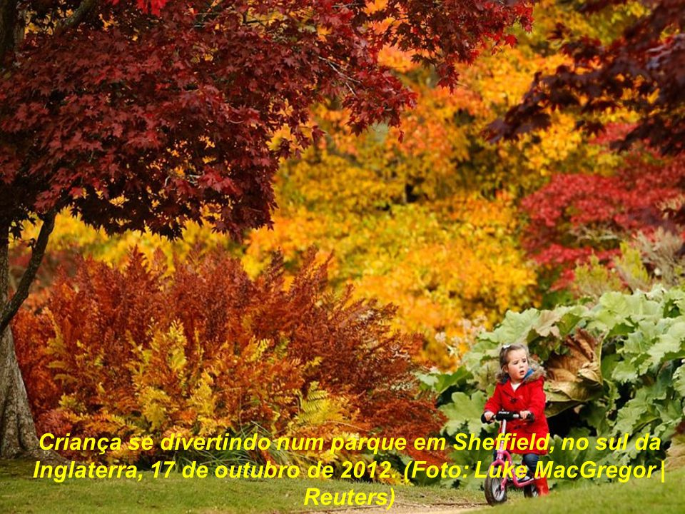 O colorido das árvores na paisagem de um parque em Sheffield, sul da Inglaterra, 17 de outubro de 2012. (Foto: Luke MacGregor | Reuters)