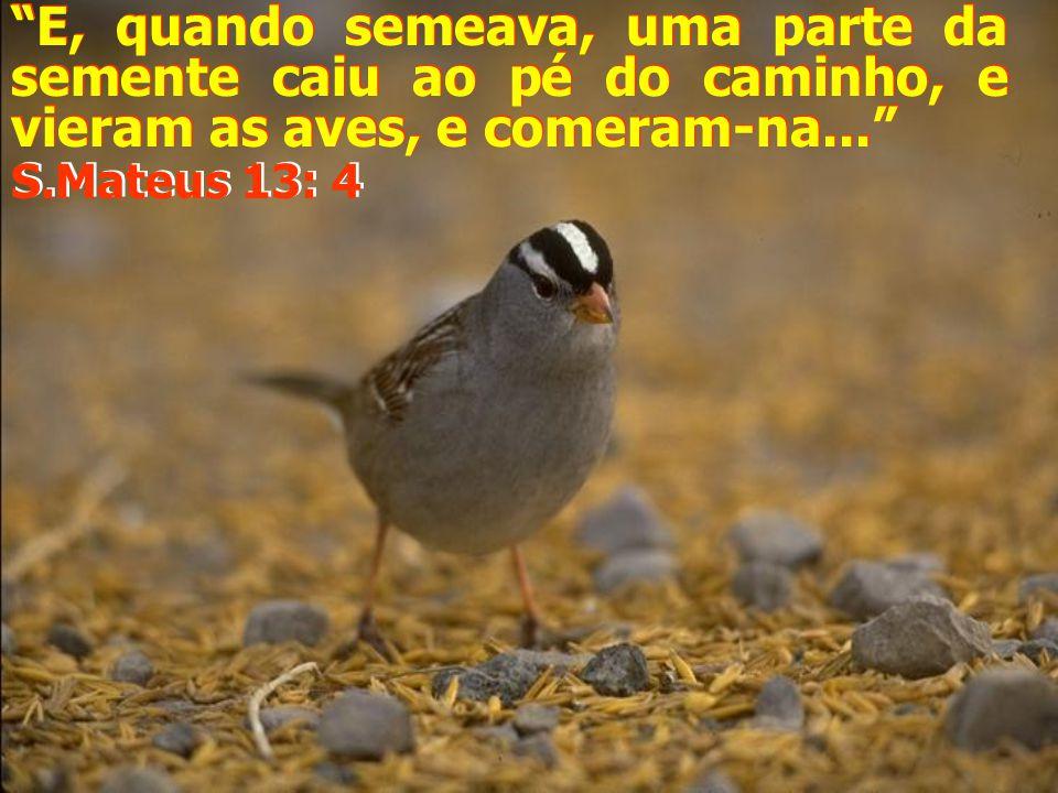 E, quando semeava, uma parte da semente caiu ao pé do caminho, e vieram as aves, e comeram-na... E, quando semeava, uma parte da semente caiu ao pé do caminho, e vieram as aves, e comeram-na... S.Mateus 13: 4 S.Mateus 13: 4