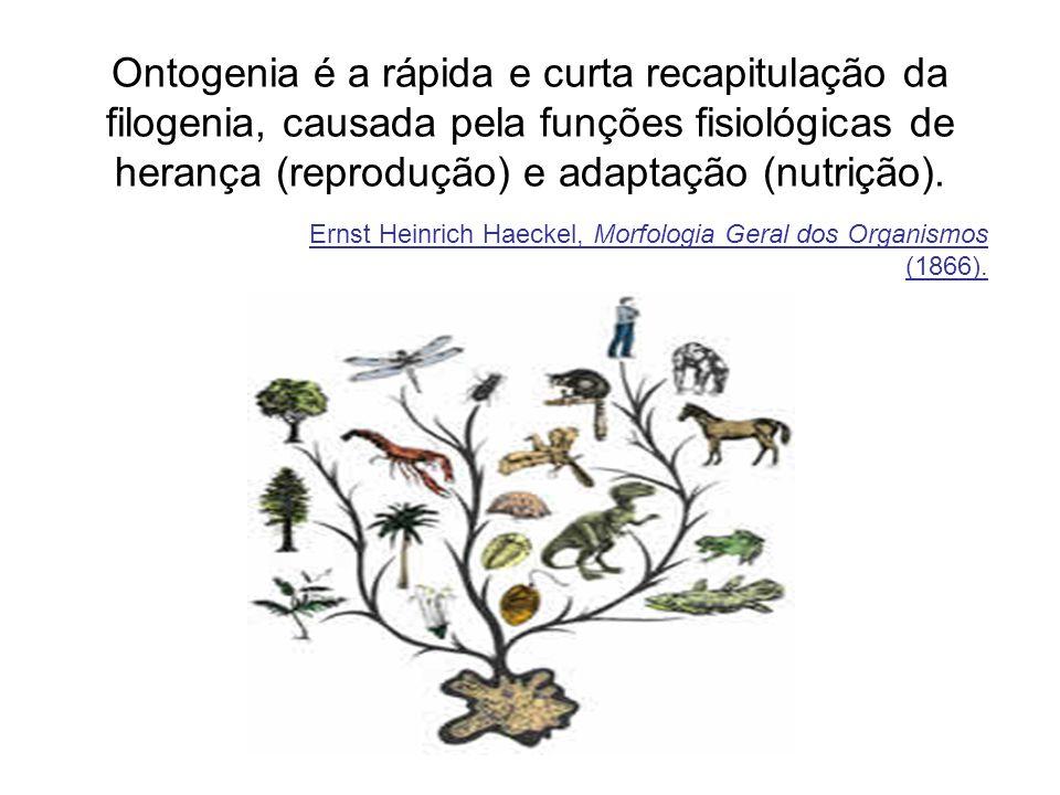 Ontogenia é a rápida e curta recapitulação da filogenia, causada pela funções fisiológicas de herança (reprodução) e adaptação (nutrição). Ernst Heinr