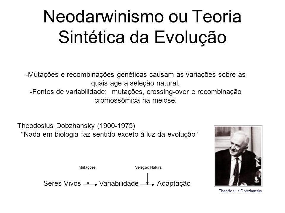 Neodarwinismo ou Teoria Sintética da Evolução -Mutações e recombinações genéticas causam as variações sobre as quais age a seleção natural. -Fontes de
