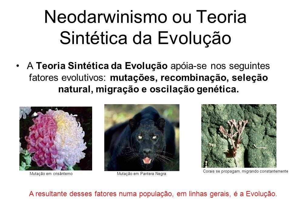 Neodarwinismo ou Teoria Sintética da Evolução •A Teoria Sintética da Evolução apóia-se nos seguintes fatores evolutivos: mutações, recombinação, seleção natural, migração e oscilação genética.