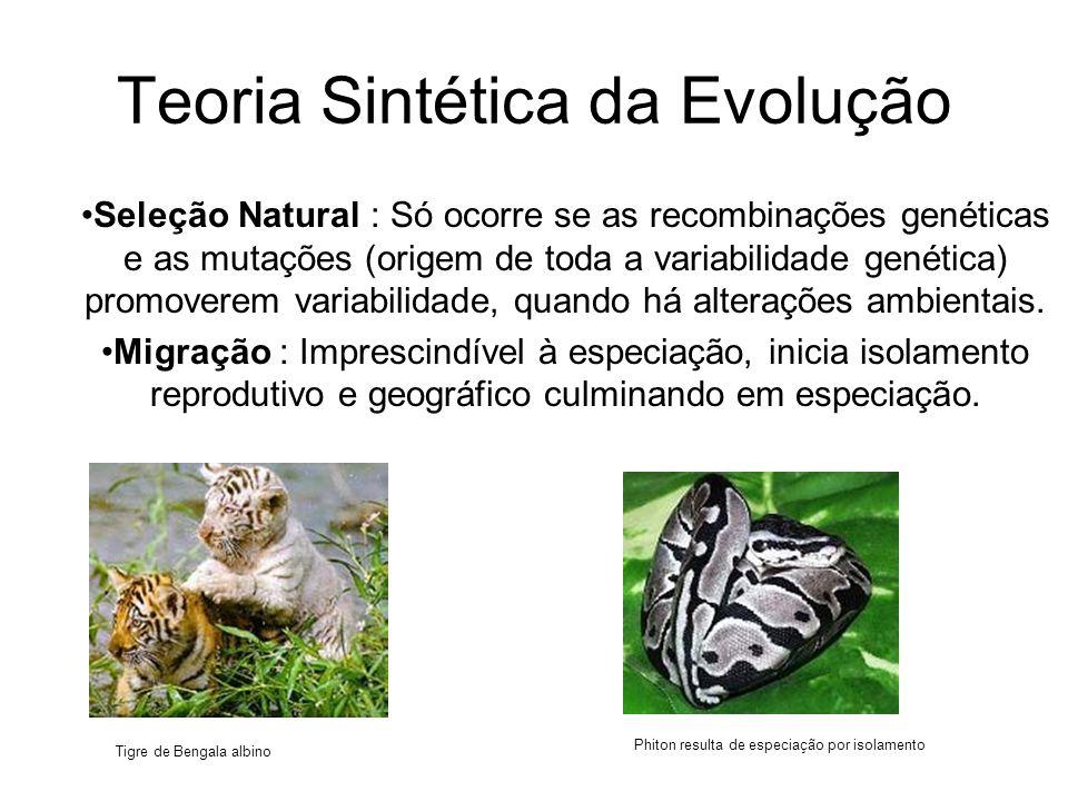 Teoria Sintética da Evolução •Seleção Natural : Só ocorre se as recombinações genéticas e as mutações (origem de toda a variabilidade genética) promoverem variabilidade, quando há alterações ambientais.