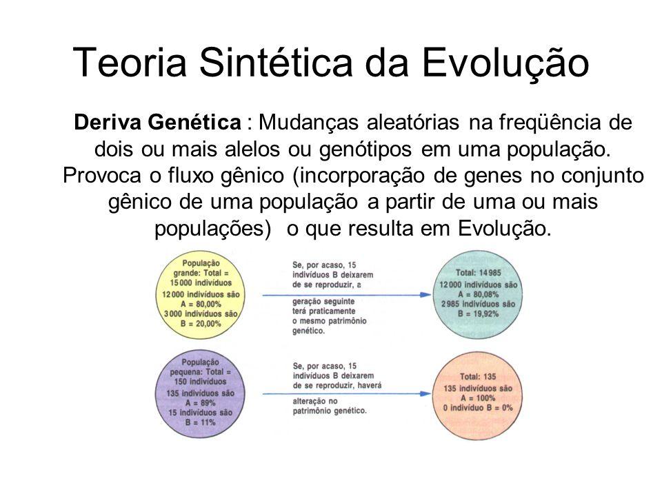 Teoria Sintética da Evolução Deriva Genética : Mudanças aleatórias na freqüência de dois ou mais alelos ou genótipos em uma população. Provoca o fluxo