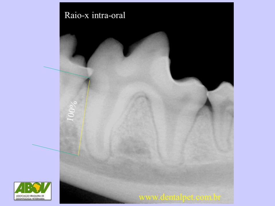 100% DP0 e DP1 Sem perda óssea www.dentalpet.com.br Raio-x intra-oral