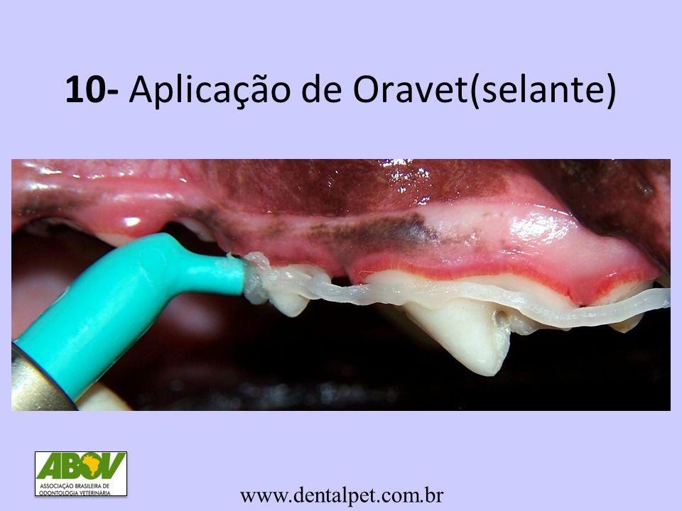 10- Aplicação de Oravet(selante) www.dentalpet.com.br