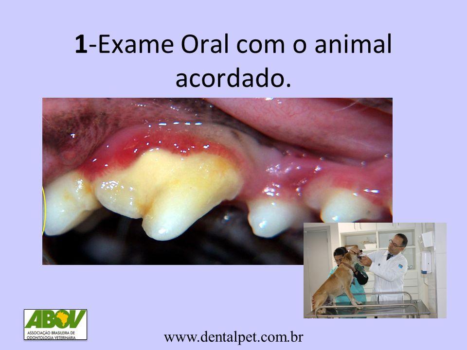 1-Exame Oral com o animal acordado. www.dentalpet.com.br