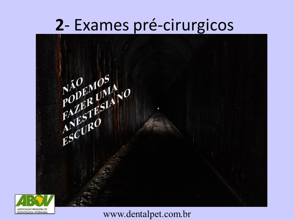 2- Exames pré-cirurgicos www.dentalpet.com.br
