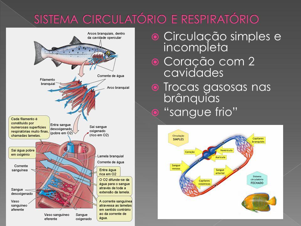 """ Circulação simples e incompleta  Coração com 2 cavidades  Trocas gasosas nas brânquias  """"sangue frio"""""""