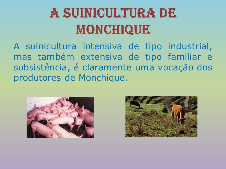 A suinicultura de Monchique Complementar à produção intensiva de suínos, existe, também em Monchique, uma importante actividade artesanal de produção de enchidos de muito boa qualidade a partir da criação extensiva do Porco Preto da Montanheira .