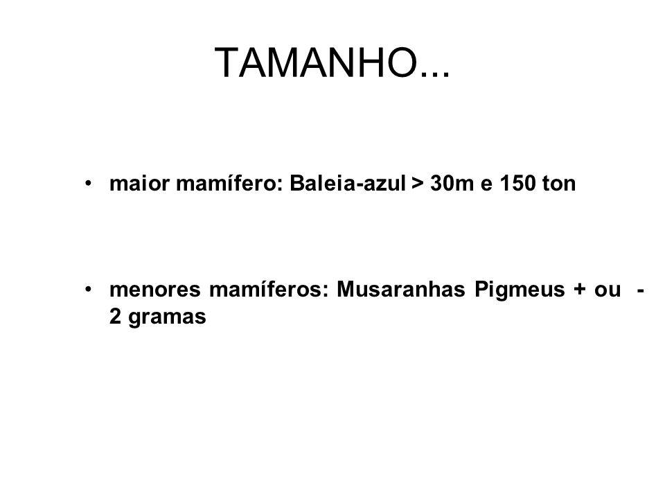 TAMANHO...
