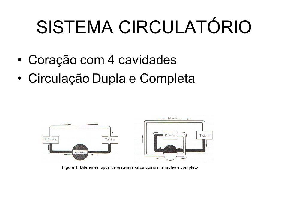 SISTEMA CIRCULATÓRIO •Coração com 4 cavidades •Circulação Dupla e Completa Figura 1: Diferentes tipos de sistemas circulatórios: simples e completo