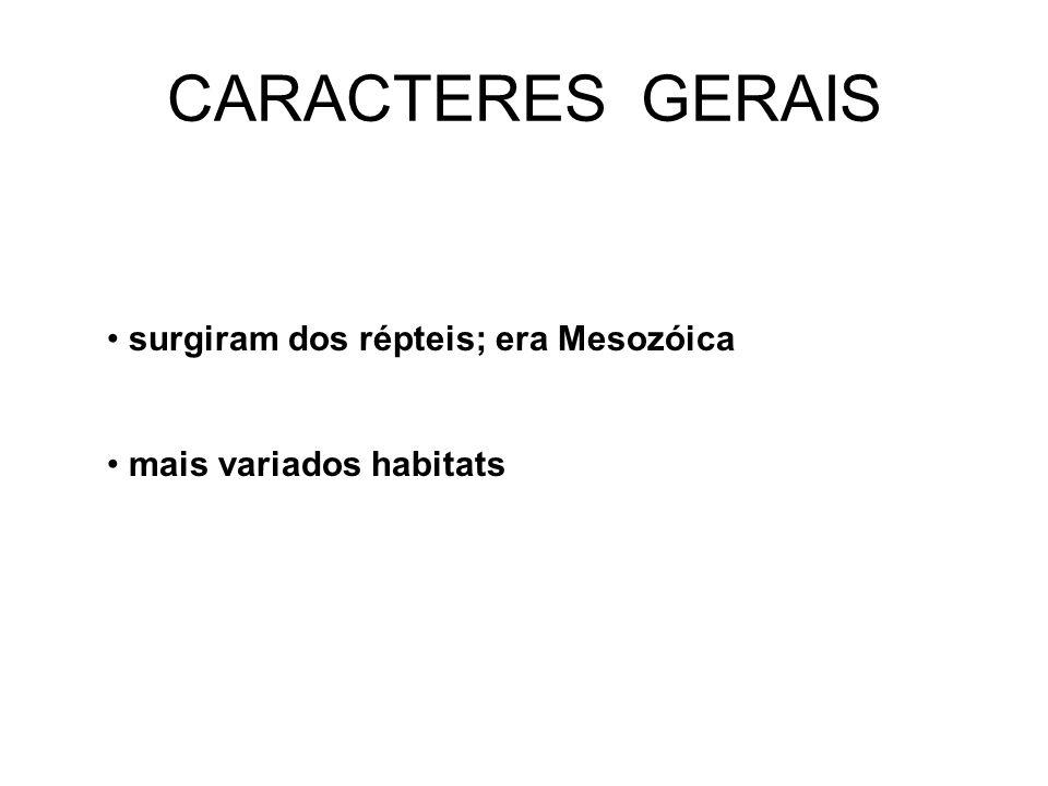 CARACTERES GERAIS • surgiram dos répteis; era Mesozóica • mais variados habitats