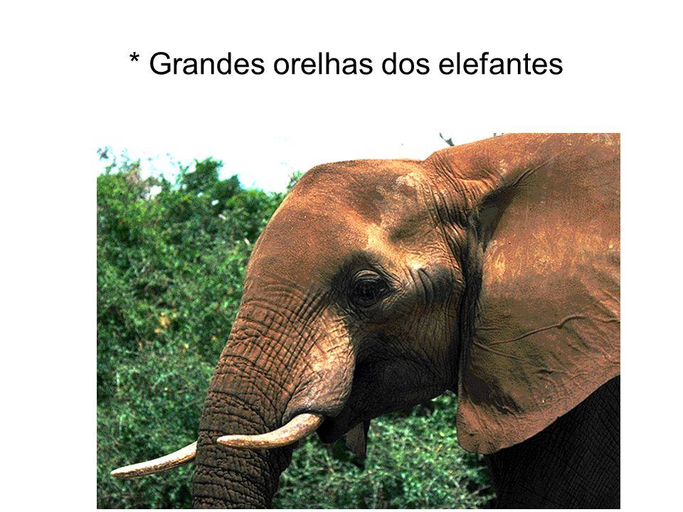 * Grandes orelhas dos elefantes