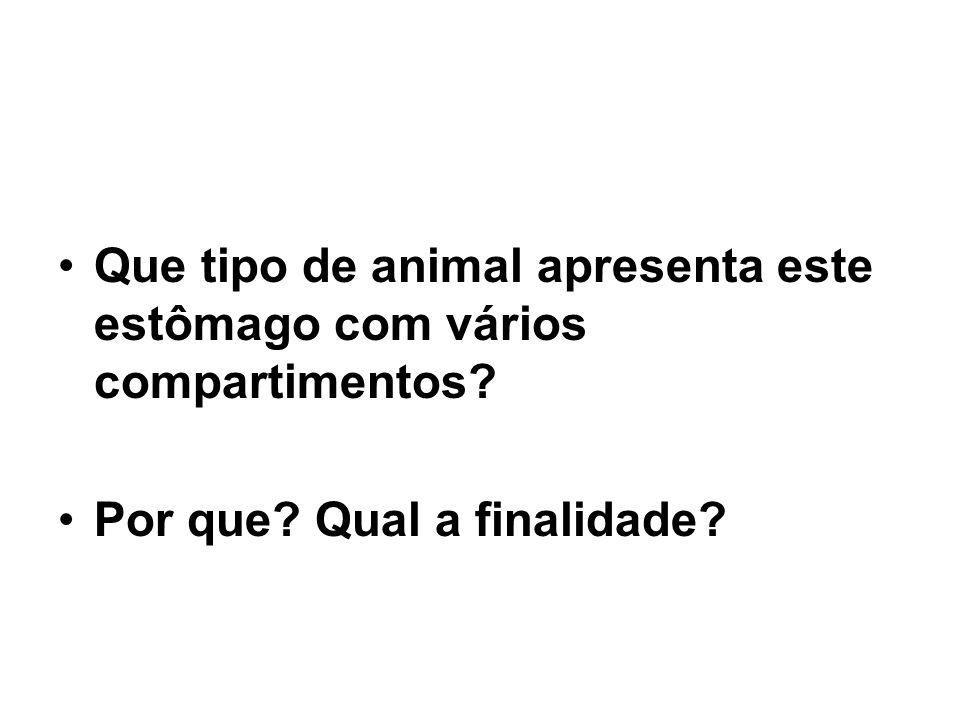 •Que tipo de animal apresenta este estômago com vários compartimentos? •Por que? Qual a finalidade?