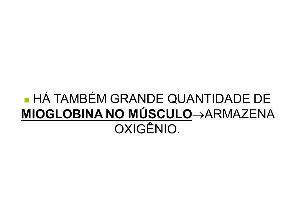  HÁ TAMBÉM GRANDE QUANTIDADE DE MIOGLOBINA NO MÚSCULO  ARMAZENA OXIGÊNIO.
