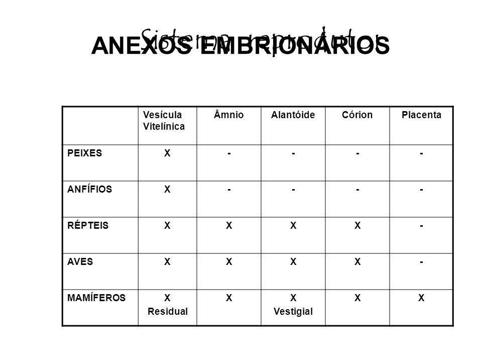 ANEXOS EMBRIONÁRIOS Vesícula Vitelínica ÂmnioAlantóideCórionPlacenta PEIXESX---- ANFÍFIOSX---- RÉPTEISXXXX- AVESXXXX- MAMÍFEROSX Residual XX Vestigial XX Sistema reprodutor