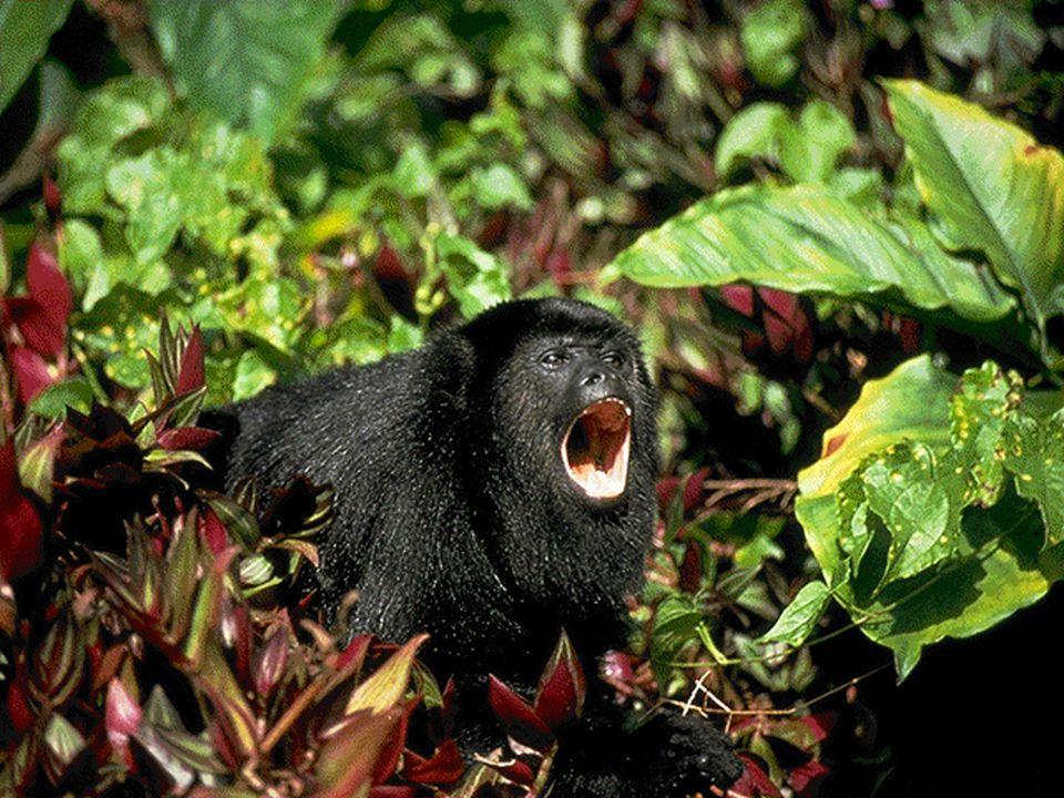 •Pode durar semanas ou meses •O animal consome a gordura acumulada em seu corpo ou acordam de tempos em tempos para comer alimentos estocados no ninho