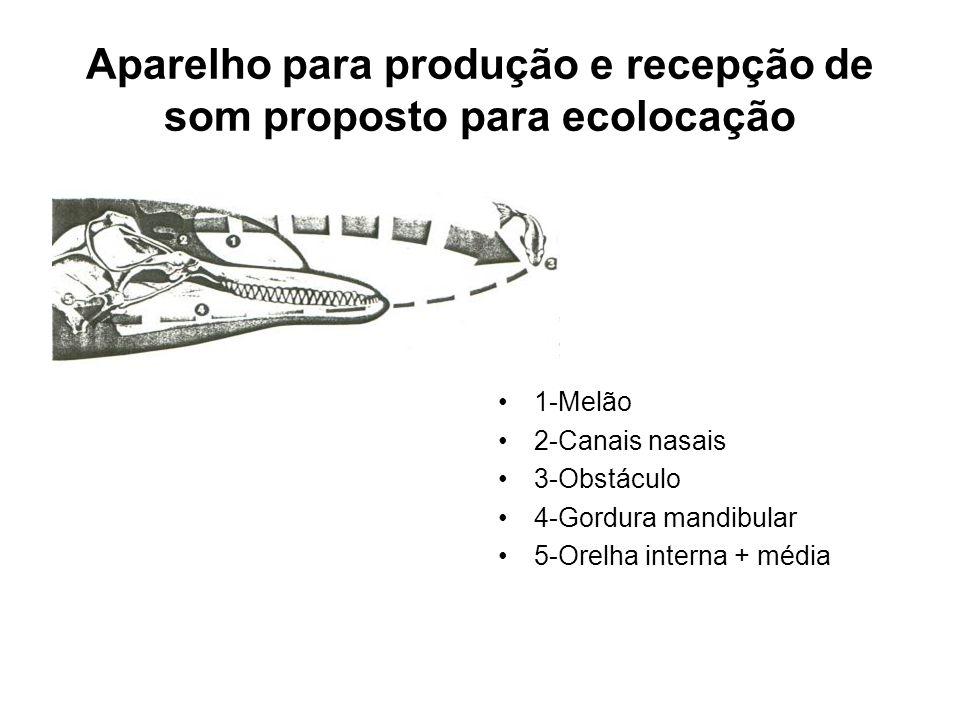 Aparelho para produção e recepção de som proposto para ecolocação •1-Melão •2-Canais nasais •3-Obstáculo •4-Gordura mandibular •5-Orelha interna + média