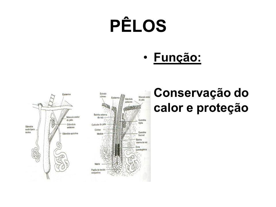 PÊLOS •Função: •Conservação do calor e proteção