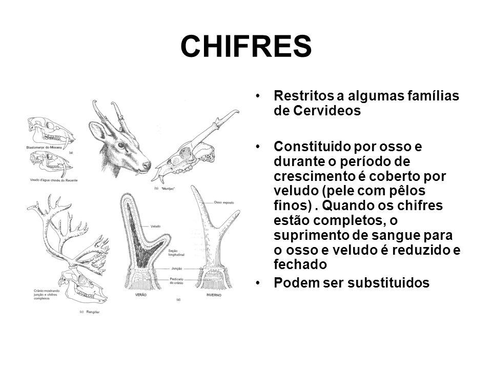 CHIFRES •Restritos a algumas famílias de Cervideos •Constituido por osso e durante o período de crescimento é coberto por veludo (pele com pêlos finos).