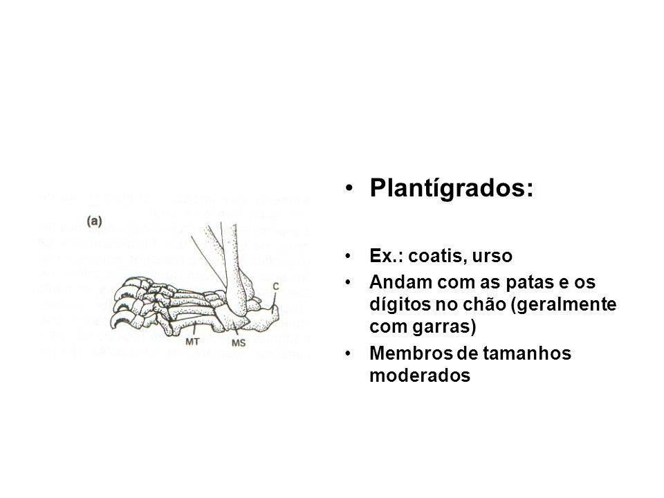 •Plantígrados: •Ex.: coatis, urso •Andam com as patas e os dígitos no chão (geralmente com garras) •Membros de tamanhos moderados