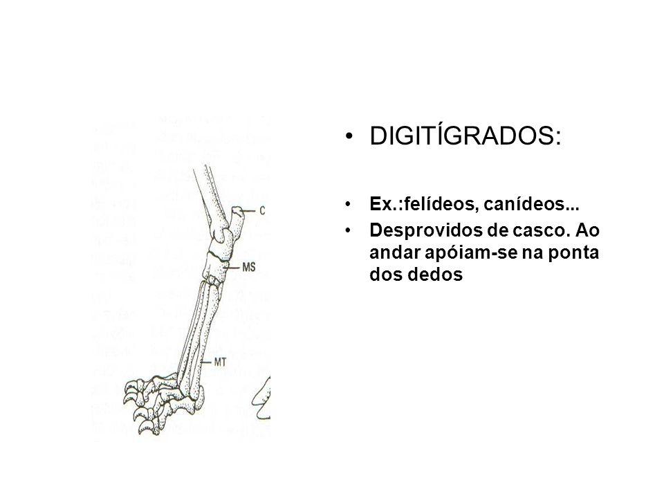 •DIGITÍGRADOS: •Ex.:felídeos, canídeos...•Desprovidos de casco.