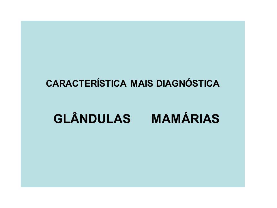 CARACTERÍSTICA MAIS DIAGNÓSTICA GLÂNDULAS MAMÁRIAS