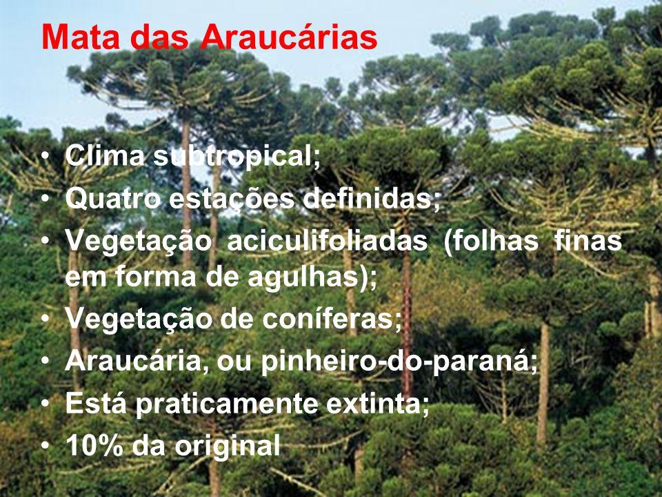 Mata das Araucárias •Clima subtropical; •Quatro estações definidas; •Vegetação aciculifoliadas (folhas finas em forma de agulhas); •Vegetação de coníferas; •Araucária, ou pinheiro-do-paraná; •Está praticamente extinta; •10% da original