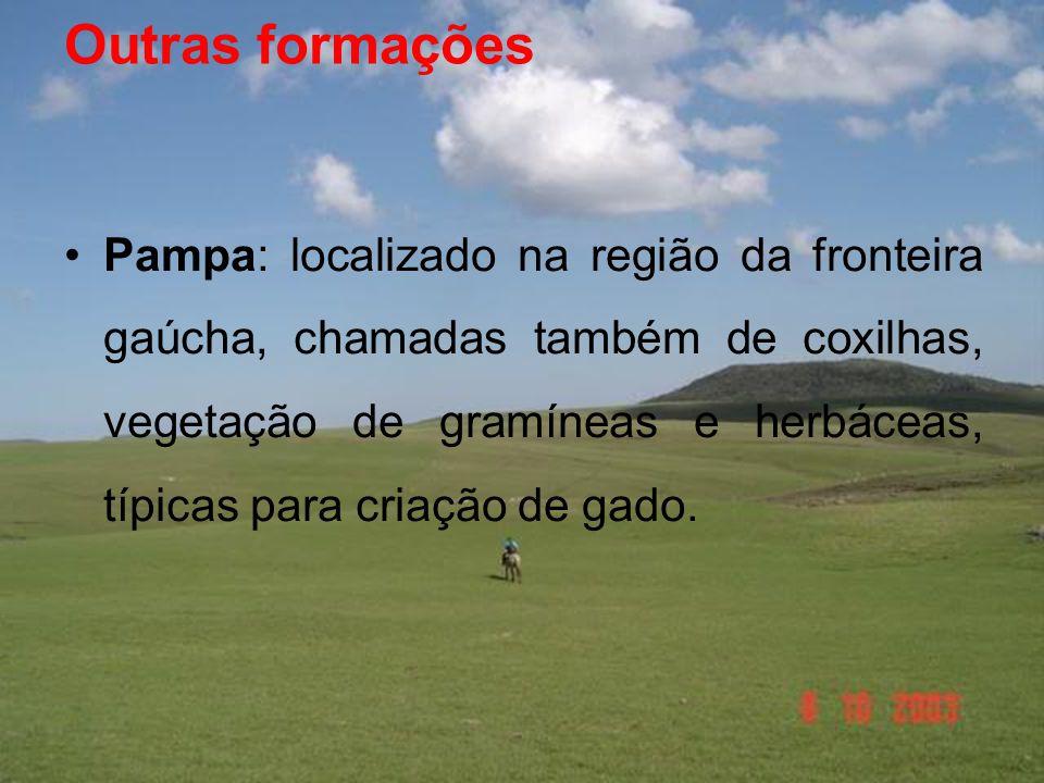 Outras formações •Pampa: localizado na região da fronteira gaúcha, chamadas também de coxilhas, vegetação de gramíneas e herbáceas, típicas para criação de gado.