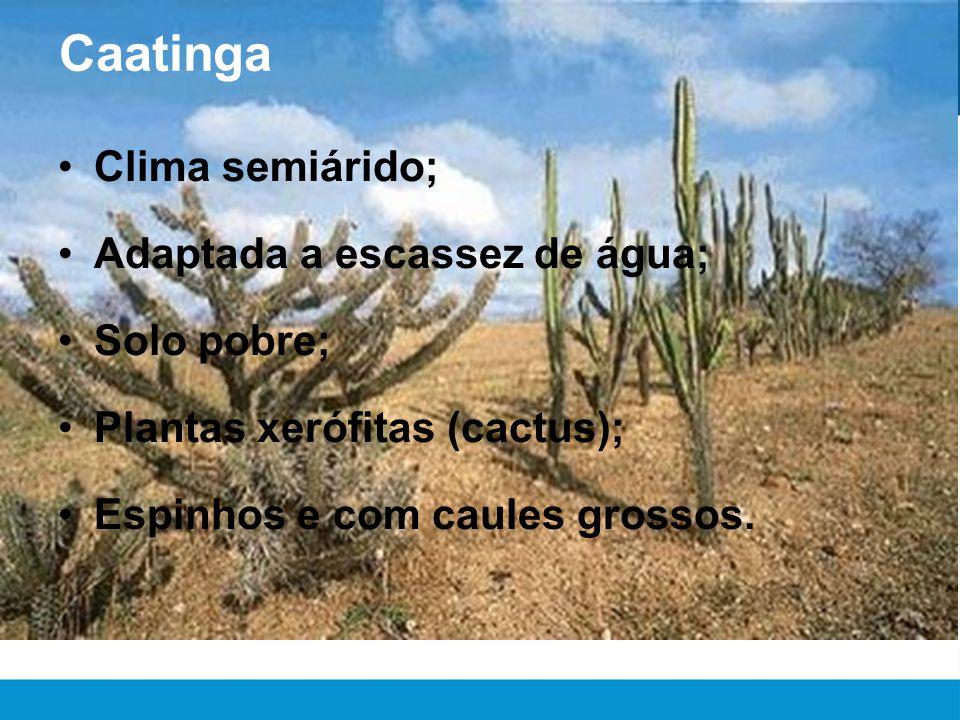 Caatinga •Clima semiárido; •Adaptada a escassez de água; •Solo pobre; •Plantas xerófitas (cactus); •Espinhos e com caules grossos.
