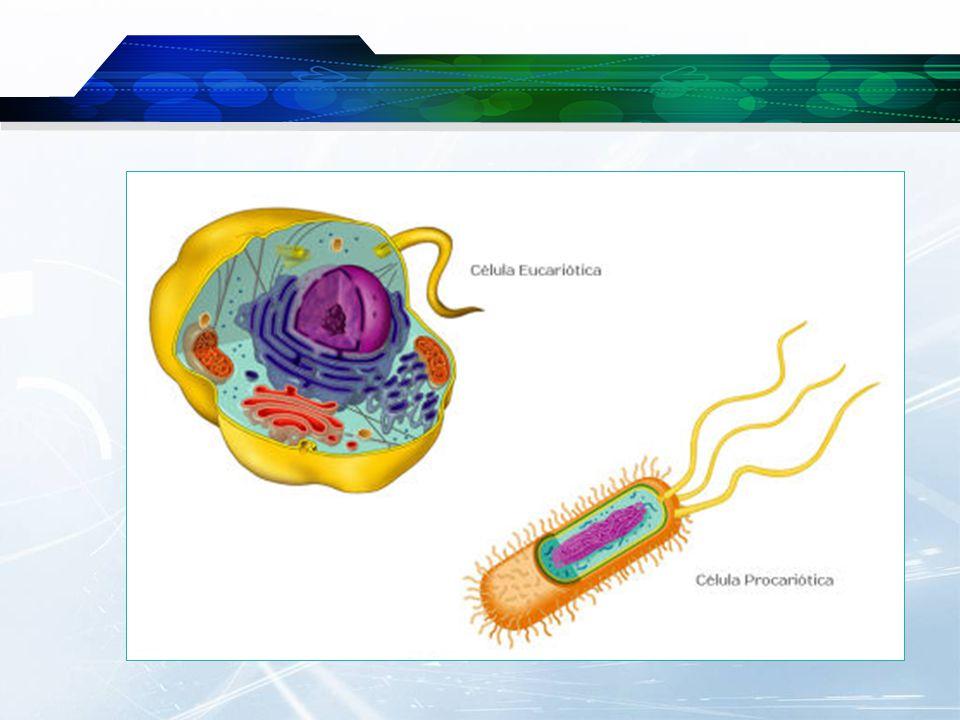 Célula procariótica… Bactéria