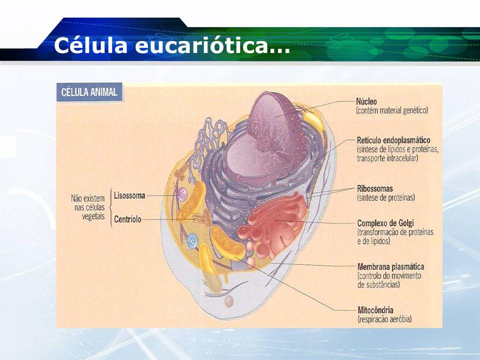 Célula eucariótica…