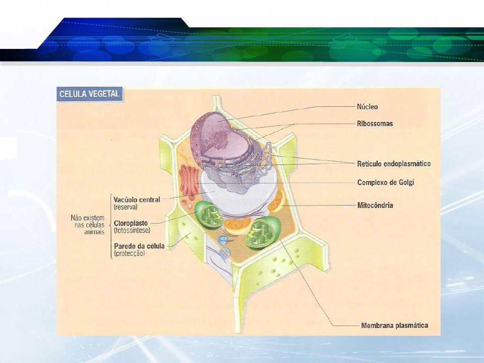  Os seres vivos apresentam diferentes níveis de organização celular.