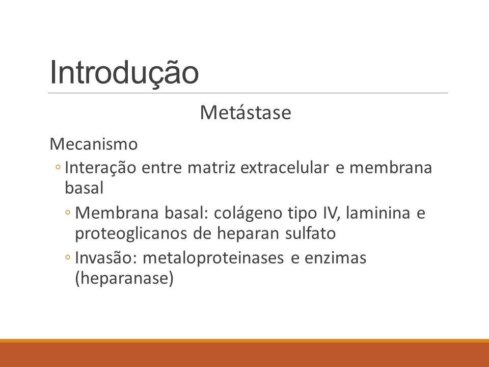 Introdução Metástase Mecanismo ◦Interação entre matriz extracelular e membrana basal ◦Membrana basal: colágeno tipo IV, laminina e proteoglicanos de h