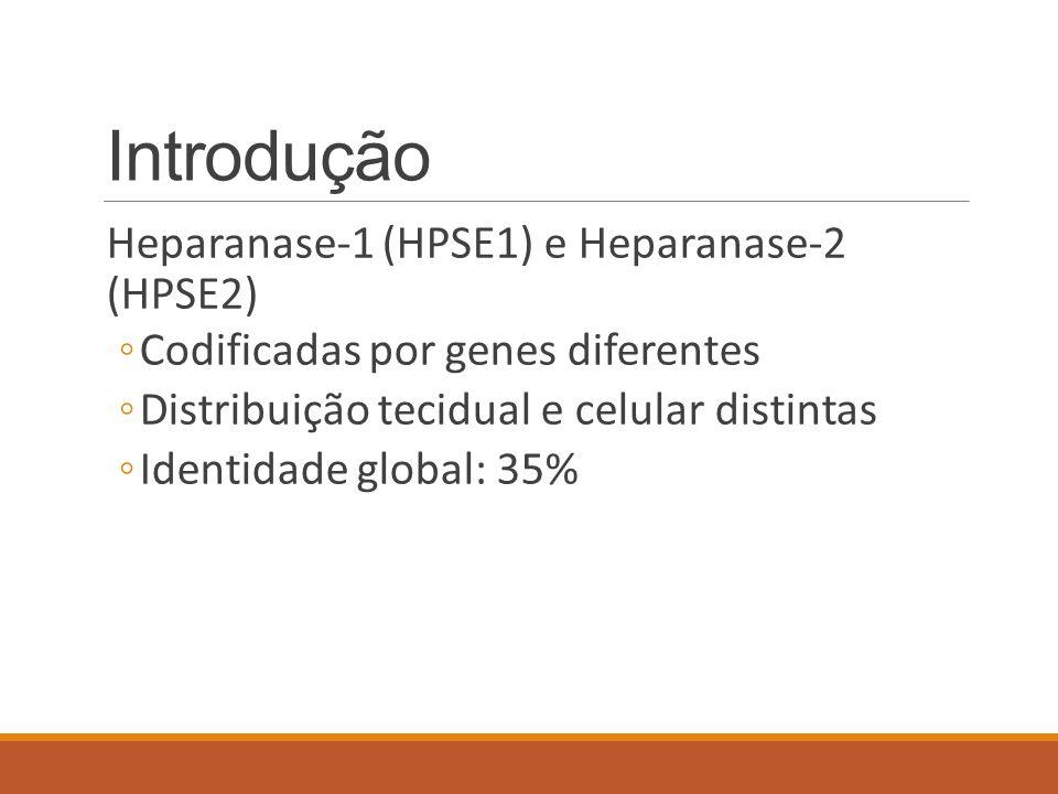 Introdução Heparanase-1 (HPSE1) e Heparanase-2 (HPSE2) ◦Codificadas por genes diferentes ◦Distribuição tecidual e celular distintas ◦Identidade global