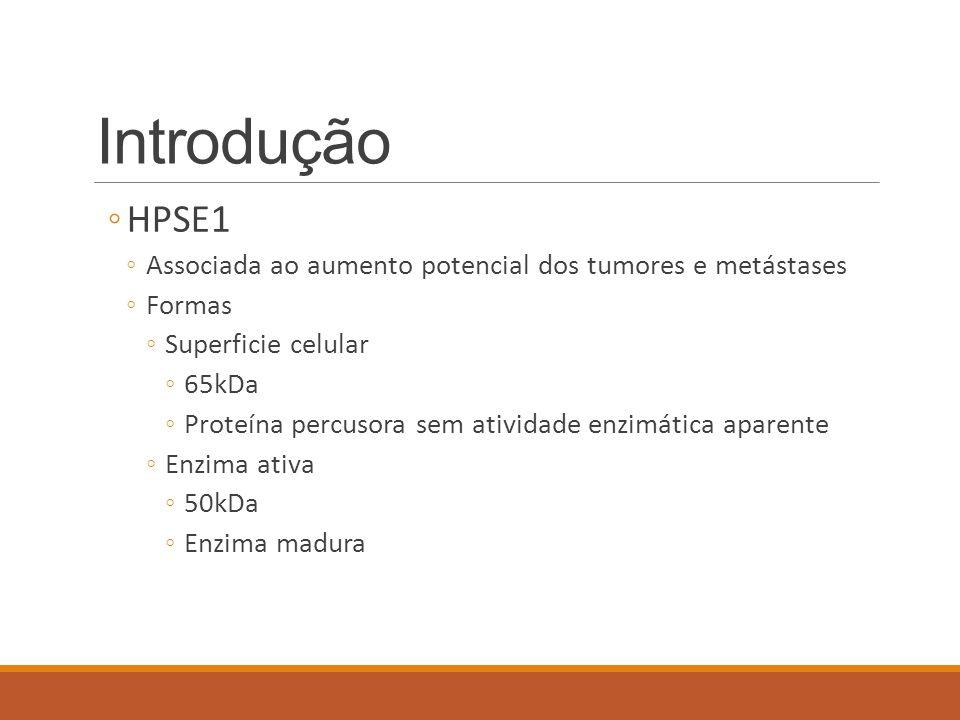 Introdução ◦HPSE1 ◦Associada ao aumento potencial dos tumores e metástases ◦Formas ◦Superficie celular ◦65kDa ◦Proteína percusora sem atividade enzimá
