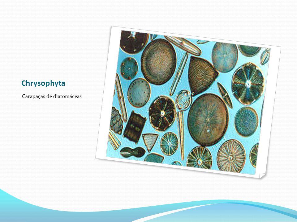 Chrysophyta Carapaças de diatomáceas