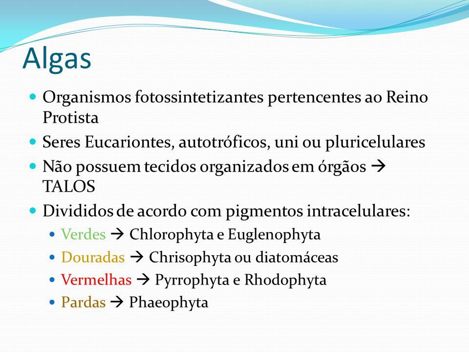 Algas  Organismos fotossintetizantes pertencentes ao Reino Protista  Seres Eucariontes, autotróficos, uni ou pluricelulares  Não possuem tecidos or