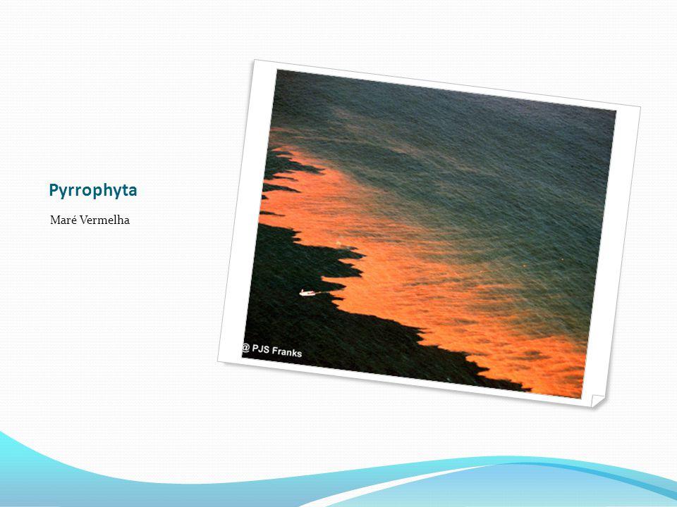 Pyrrophyta Maré Vermelha