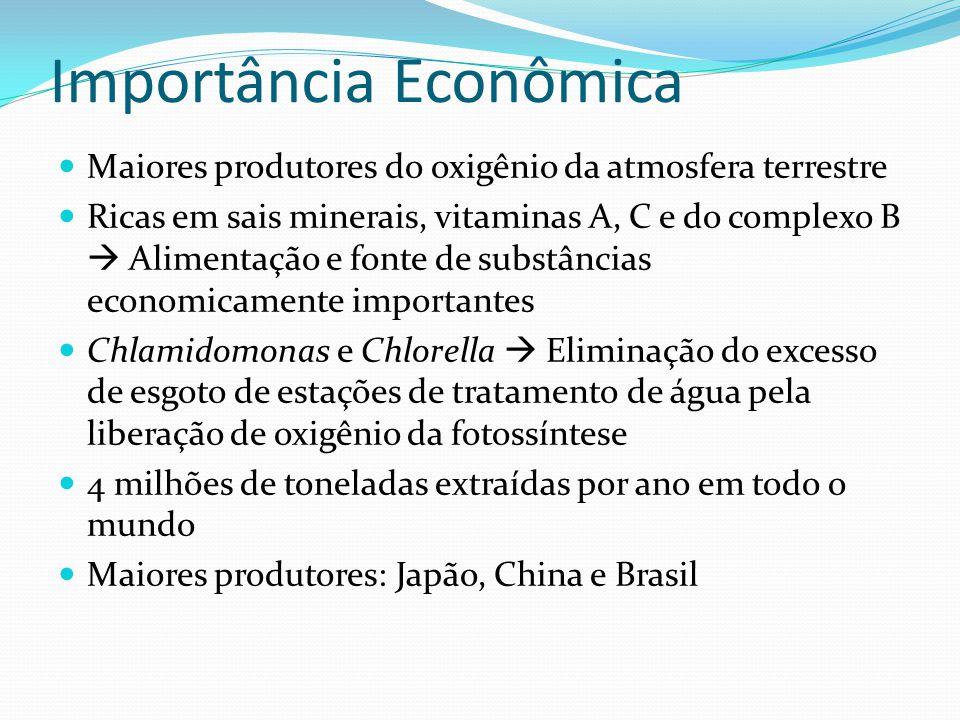 Importância Econômica  Maiores produtores do oxigênio da atmosfera terrestre  Ricas em sais minerais, vitaminas A, C e do complexo B  Alimentação e